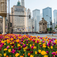 Michigan Ave spring time photography